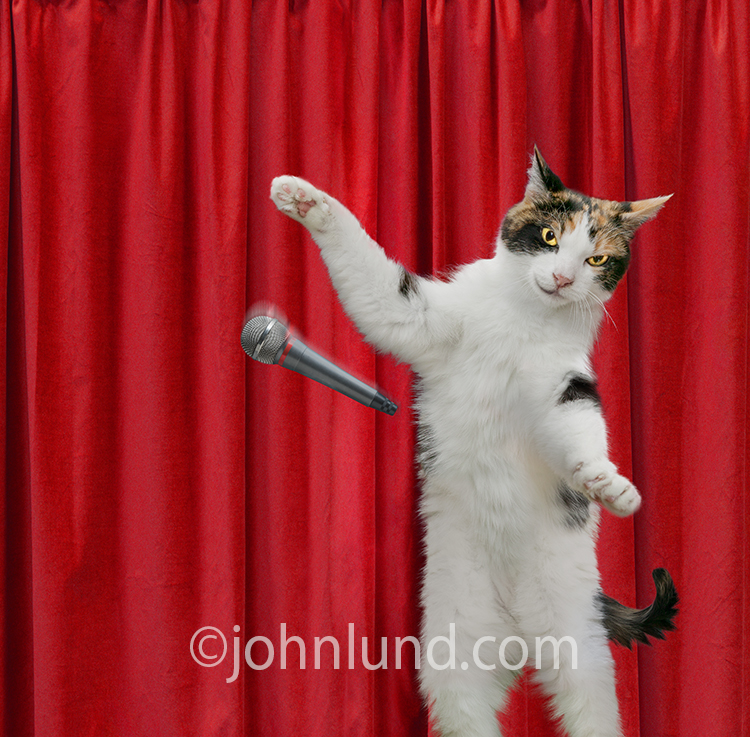 A calico cat on stage against a red curtain drops the mic in a humorous stock photo about success and superlatives.