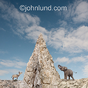 Politics as ususal might be the caption for this image of a donkey and an elephant, representing democrats and republicans, separated by a huge mountain of rock.
