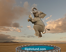 An elephant joyously jumps on a trampoline in this funny elephant stock photo about the unexpected, fun, and possibilities.