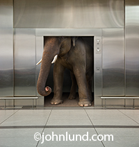 An elephant is almost entirely wedged into an elevator in this humorous concept stock photo.