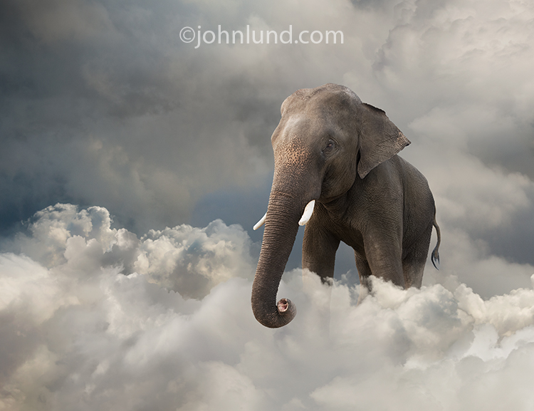 An elephant stands in a cloud bank in a stock photo about obvious, but ignored, problems in cloud computing and online networking.