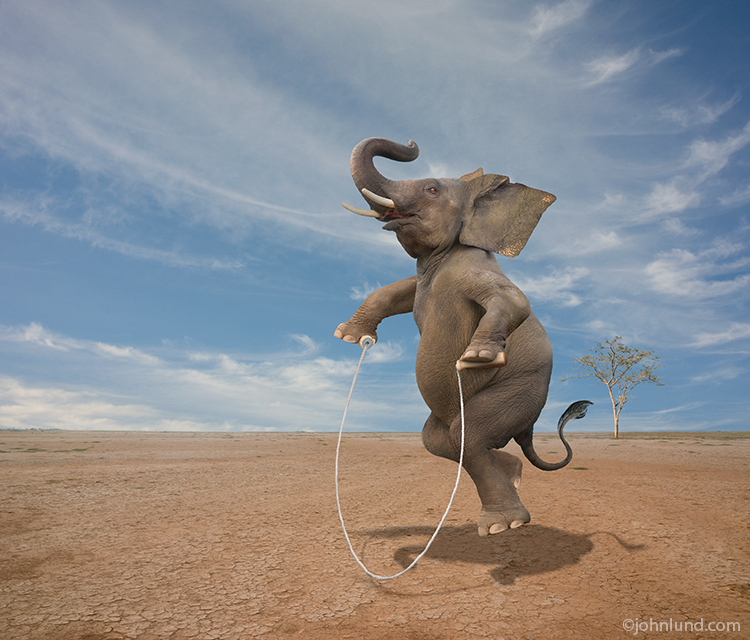 An elephant is jumping rope on a vast plain in a demonstration of surprising skill, agility, balance and unexpected vitality in a compelling concept stock photo.