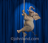 An elephant is pole dancing in this funny elephant stock photo created for advertising, editorial and humorous greeting card uses.