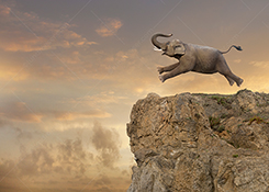 An elephant races to the edge of a cliff in a stock photo metaphor for extinction, danger, risk, challenge and problems.