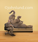 An elephant reclines on a psychiatrist's couch sharing his story with his Freudian-looking therapist in a humorous stock photo about counseling, the elephant in the room, and psychiatry.