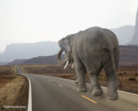 Conceptual stock photo of a lone elephant strolling down a deserted highway in the middle of nowhere, seeking the way forward.