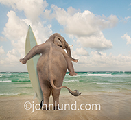 An elephant stands cradling his surfboard as he scans the ocean for big waves in a humorous stock photo and greeting card image.