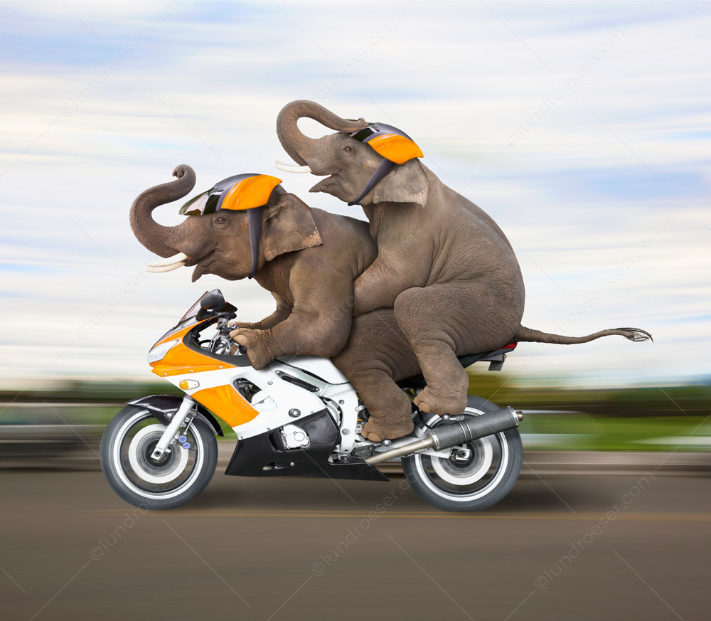 Two elephants zoom down the road in a humorous elephant stock photo.