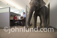 An elephant is in the room, in the office to be more exact, in this concept stock image showing business people ignoring the obvious.