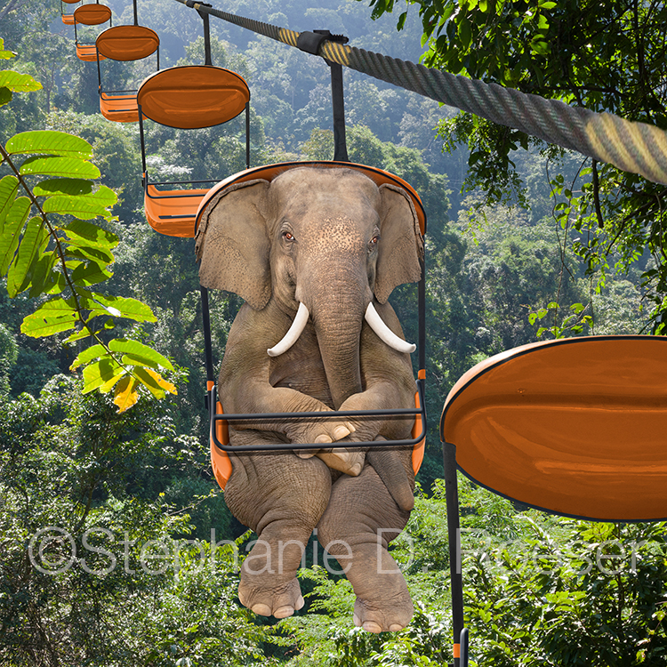 An elephant rides a tram over the jungle below in this funny greeting card and stock photo image.