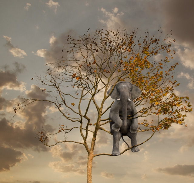 Elephant picture - hiding in a tree