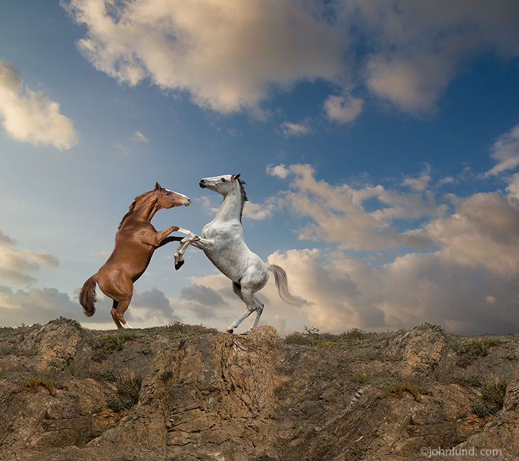 Competition and conflict are two of the important concepts illustrated in this photo of two rearing horses fighting at the edge of an embankment or cliff.