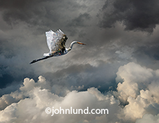 An egret, with crushed aluminum cans visible through it's body, flies through high altitude storm clouds in a metaphorical image about pollution, ecological problems, and environmental issues.