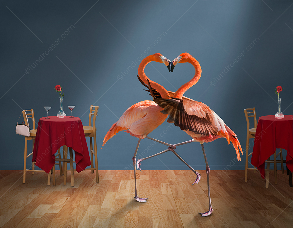"In a funny greeting card photo two flamingos embrace on a club dance floor with their necks forming a heart shape as that dance the ""Flamingo""!"