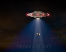 A flying saucer is pulling up a cow using its tractor beam in this humorous flying saucer cow abduction stock photo.