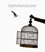 A hand holds out an empty bird cage with an open door as a bird flies off into the distance in a stock photo about freedom and release.