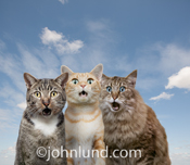 Three cats stare out at the viewer with expressions of amazement and wonder in a funny feline photo.
