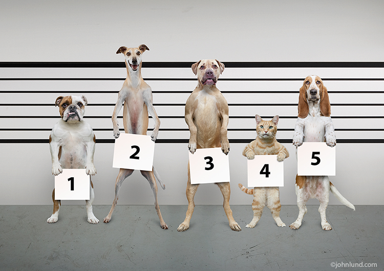 This funny police line up photo features four dogs and a cat one of which is doubtless the perpetrator of some heinous crime such as wrecking a home while the owner is at work!
