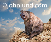 A funny bear sits on a rock outcropping with a quizzical look of surprise on his face as if asking