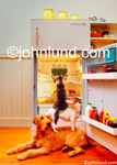 Two dogs and a cat use teamwork to take beer from a refrigerator in this funny animal picture. Animal teamwork picture.