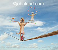 In this funny tight rope balancing act stock photo a Bloodhound rides a unicycle while a cat juggles on one end of the dog's balance pole and a goldfish in a bowl balances on the other end.