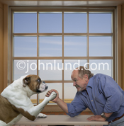 Funny image of a bulldog arm wrestling a man. As they grapple They stare fiercely into each other's eyes in a psyche war.