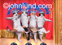 four cats dance the can can on a stage and wear outrageous tiaras adorned with rhinesotnes and bright blue feathers.