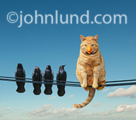 A funny cat poses as a bird, wearing a fake beak, as he sits on telephone wires next to a flock of blackbirds, one of whom has become a tad suspicious!