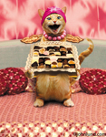 Maude the cat sits on her bed holding a big box of chocolate candies in a funny cat pix.
