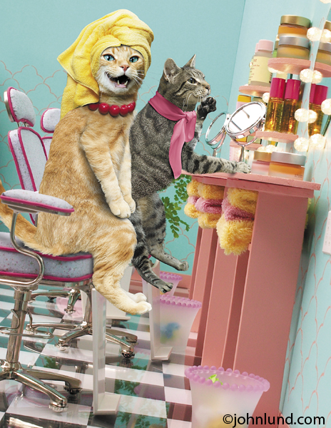 Two cats sit in a beauty salon and primp in front of mirrors in a parody of a beauty spa photo.