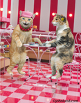 Two cats sit at a table in a cafe and gossip over a cup of coffee in a funny cat pix.