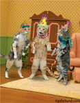 Three party cats stand in a living room wearing birthday hats.