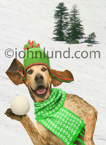 German Short Haired Pointer, on the snowy slopes, is about to throw a snowball!