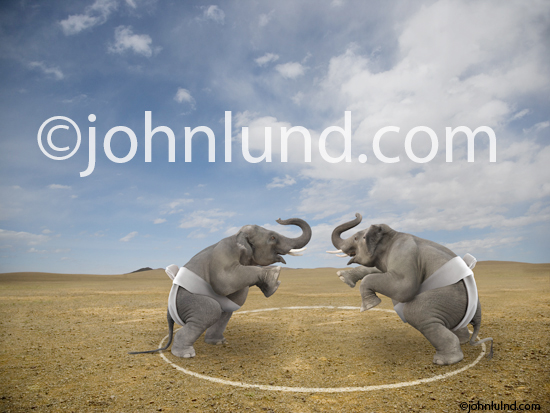 Two elephants square off in a battle for dominance inside a Sumo ring in this funny lol Pachyderm photo.