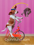 Funny Bassett hound stock photo of a dog exercising on a stationary bike using a cat hanging over his head as motivation as he pedals. Seriously funny pet dog and cat pics.