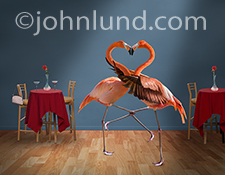 In a funny greeting card photo two flamingos embrace on a club dance floor with their necks forming a heart shape as that dance the