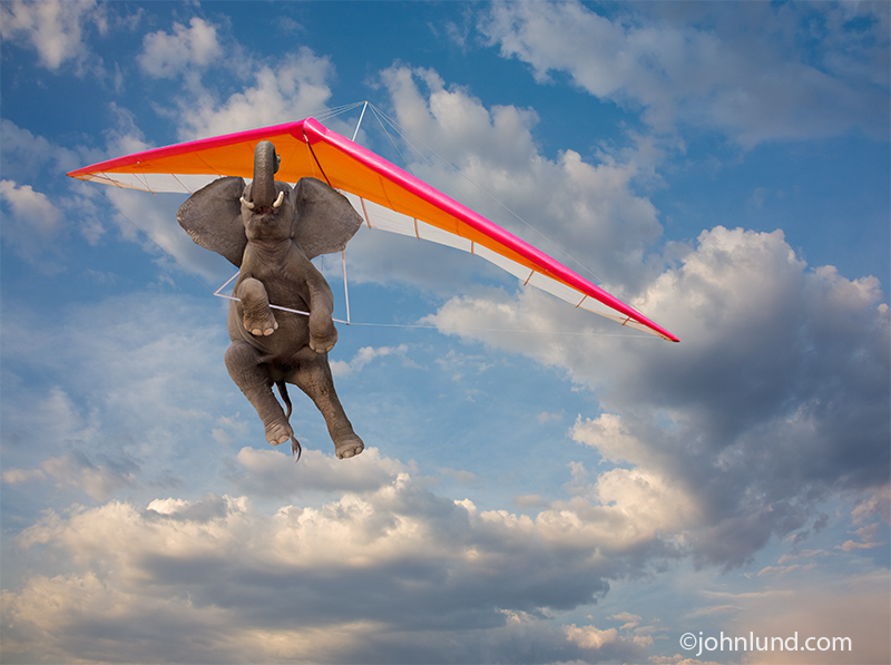 An elephant flies overhead piloting a hang glider in this funny elephant picture.