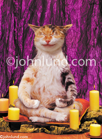 Funny animal picture of a cat meditating in a lotus position, sitting on pillows and surrounded by candles. Spiritual Kitty!