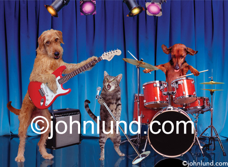 Funny Stock picture of two dogs and a cat playing in a rock band. The cat is the front man with Daschund drummer.