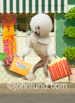 Funny anthropomorphic picture of a poodle with shopping bags walking happily down the avenue in front of local shops. Poodles acting like humans.
