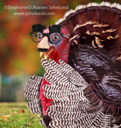 A thanksgiving turkey is working on his survival skills wearing Groucho Glasses to disguise himself on thanksgiving day in a funny greeting card photo.