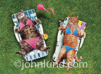 Hilarious lolcat photo of two tabby cats wearing two piece bathing suits and laying on lounge chairs in the sun getting a tan. One has a pink bathing suit and the orange tabby has a blue suit.