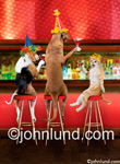 Two dogs and a cat toast each other in a bar in with birthday hats on. Dogs and cats having a drink in a bar and sitting on bar stools.