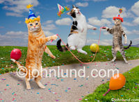 Picture of three energetic birthday cats jumping rope and wearing birthday hats. They are surrounded by balloons and confetti. Funny cat pictures.
