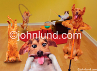 Party animal pets go crazy in a living room jump roping, pogo sticking and more in this humorous greeting card and stock photo image.