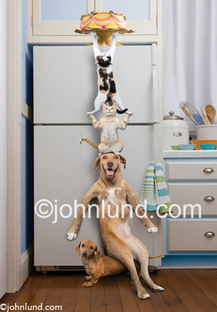 Funny animal stock pictures of cats and dogs teaming up to steal a cake from the top of a refrigerator. This is the original stock photo.