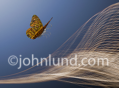 Future technology is visually represented in this photo of a butterfly with a metal body and wings of computer circuitry with a high tech background of a light patter against a blue sky.