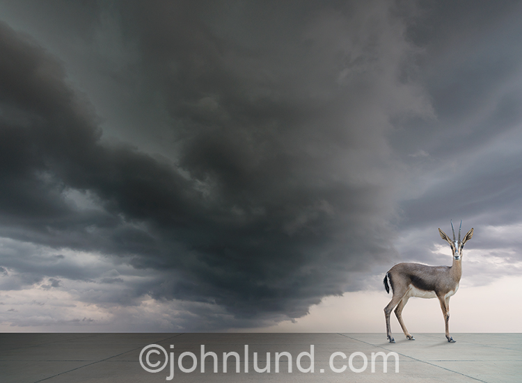 Endangered animals, habitat loss, and the threat of extinction are all illustrated in this stock photo of a Gazelle stand on a vast concrete expanse under dark storm clouds.