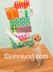 Stock photo and funny animal antics picture of a golden retriever puppy with it's arms stacked high with gifts for a birthday party.