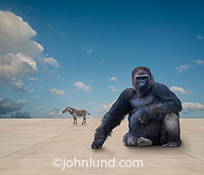 A gorilla and a zebra sit and stand on a vast expanse of concrete against a lightly clouded blue sky in a stark testament to environmental problems such as habitat loss and the irresponsibility of man in regards to the natural world.